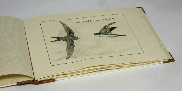 Swifts and Martins of Selborne title page